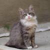 cat-150009 (big andrei) Tags: pet colour macro animal cat olympus zuiko omd em5 50mm20