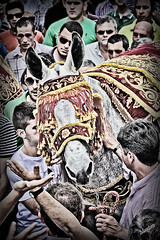 """""""Bestias Cruz de Abajo""""2 (J.J. Mantero) Tags: espaa canon huelva fiestas andalucia bandera romero hdr mulo tradicion tradiciones romeria crucesdemayo bestias mulos berrocal mantero cuencaminera 450d cruzdeabajo mozodelabandera"""