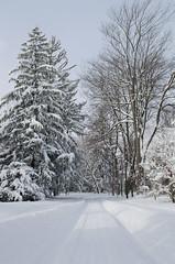 Perfect Morning (gpereir4) Tags: winter snow ontario canada storm tree ice photography nikon nikond7000