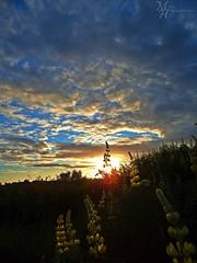 Pintura de luz y sombra (ManickX92) Tags: naturaleza flores luz sol atardecer arboles natural amarillo nubes naranja sombras novena naranjo araucania novenaregion laaraucania