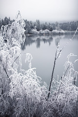 Montana Winter Frost 4 (Forrest.Rowell) Tags: winter snow cold ice photography frozen montana frost crystals kalispell winterwonderland forrestrowell