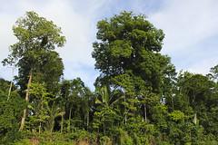 NazihaMestaoui-Ashaninka paysage 05 p (naturerights) Tags: acre amazonia ashaninka naturerights apiwtxa