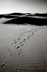 Longotoma XIV (- Pimentel -) Tags: chile natural dunas patrimonio longotoma