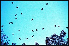 Birds over Central Park, New York (lelobnu) Tags: city autumn trees newyork fall nature birds centralpark bluesky streamzoo
