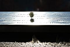 9/11 Memorial (Riccardo Maria Mantero) Tags: christmas xmas city travel usa holiday newyork rose memorial personal 911 riccardo mantero stockcategories afsvrzoomnikkor70300mmf4556gifed