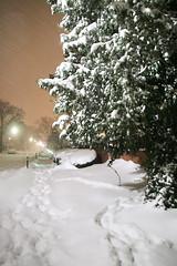 FerndaleWithington (andreathayne) Tags: winter snow tree downtown michigan january sidewalk snowfall ferndale severeweather accumulation andreakaminski andreakaminskiphotography winterstormion