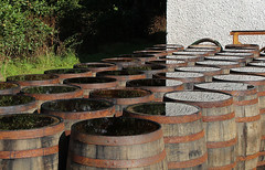 casks (floating_stump) Tags: reflection scotland islay whisky scotch distillery laphroaig portellen casks rebelt5i