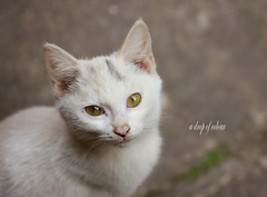 Today's cat 2014.1.24 (ladious666) Tags: life animal cat alive catsplanet