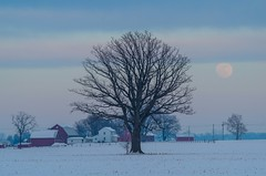 Winter Moon (ramseybuckeye) Tags: life county winter ohio moon snow tree art pentax farm tamron 70200 putnam k30 {vision}:{outdoor}=099 {vision}:{sky}=0717 {vision}:{mountain}=0893