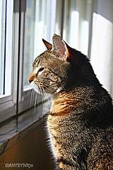 Interesante (dantethx70) Tags: cat gatos