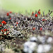 """lichen 1 • <a style=""""font-size:0.8em;"""" href=""""http://www.flickr.com/photos/124671209@N02/14214442475/"""" target=""""_blank"""">View on Flickr</a>"""