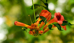 (FabiolaMancini) Tags: barcelona flower nature photography nikon spagna d3100
