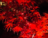 Red II (Kiril Strax) Tags: red colours dall maple redleaves
