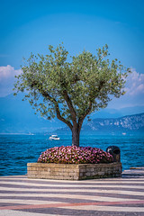 "Lazise 2016 • <a style=""font-size:0.8em;"" href=""http://www.flickr.com/photos/58574596@N06/25305877789/"" target=""_blank"">View on Flickr</a>"