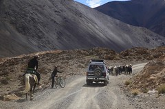 Herding The Family Yaks Murghob Pamir Highway Tajikistan Central Asia (eriagn) Tags: asia centralasia tajikistan murghab pamir mountainous mountains semiarid highaltitude herding herd yaks family nomads seminomadic livestock road dirtroad 4wd horse bicycle geofgraphy geology grass river eriagn ngairelawson ngairehart travel photography murghob summer dry dusty