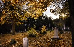Final Arrangements (drei88) Tags: autumn leaves fall twilight sunset eternal glow shadow seasonschange lastlight