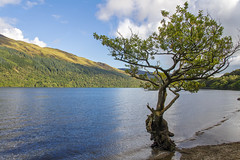 Lone Tree (Kev Gregory (General)) Tags: loch lomond lake water scenery tree blue sky clouds scenic landscape scotland scottish highlands reflections kev gregory canon 7d
