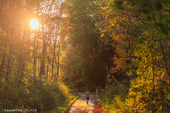 Spring Run Sunset (Samantha Decker) Tags: canonef135mmf2lusm canoneos6d ny samanthadecker saratogasprings springruntrail autumn fall foliage upstate