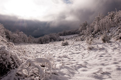 Beauty of Winter II (luca_pictures) Tags: marche italy winter snow cold sunset ice woods trees storm afterthestorm winterstorm clouds sky peaceful beautyinnature outdoor