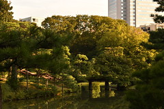 Floating Mood (Oliver MK) Tags: floating mood rikugien en garden japanese japan tokyo asia travel amateur nikon d5500 bridge tree trees branch park bunky    outdoor