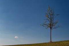 """Minimalist Encounter"" (helmet13) Tags: d800e raw minimalist encounter tree cloud simplicity singletree singlecloud bluesky sunshine greenmeadow aoi heartaward peaceaward platinumpeaceaward 100faves world100f"