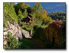 Weinberg Idylle (HP-Fotografie) Tags: schweiz kanton stgallen weinberge alte weinkultur lumix gx7 20mm