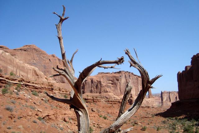 Branch frame, red rock
