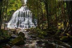 Nelson Falls, Tasmania (Ben_Cooper) Tags: australia tasmania waterfall waterfalls falls fall nelsonfalls runningwater