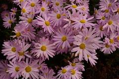 JJN_3070 (James J. Novotny) Tags: chicago conservatory botanical gardens garden flowers flower nikon d750 path paths skokie lagoons