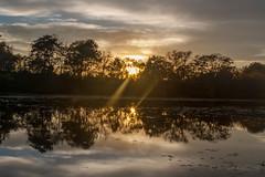 Nature Yin Yang (artseejodee) Tags: colorphotography october landscape midatlantic nature water newjersey lake fall reflect light nj trees capemaycounty southjersey outdoors magnolialake autumn pond sun yinyang