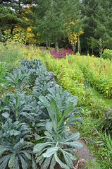 NRCS helps family transition from backyard gardening to organic-certified farming (NRCS_Oregon) Tags: nrcs oregon natural resources conservation service hillsboro transitioning organic farming vegetable financial assistance farm bill high tunnel eqip usda portland