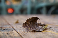 fall is here to stay - for a while (raumoberbayern) Tags: fall herbst laub munich mnchen robbbilder urbanfragments