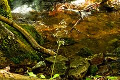 LRa05-24-16k-IMG_2461_62_63HDR- (Glotzsee) Tags: nature virginia blueridgeparkway blueridgemountains blueridge railroadtracks hdr glotzsee