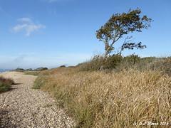 The foreshore (ExeDave) Tags: p1020431 hookwithwarsash local naturereserve lnr hook links hampshire se england coastal foreshore beach scrub tallherb grassland landscape holiday october 2016 pebble southamptonwater