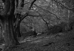 Long exposure of rocks & autumn trees near Gibson Mill, Hardcastle Crags. (kyliepics) Tags: olympus e520 evolt520 olympuszuikodigital1122mmf2835 srbpsizend3010stopfilter blackwhite darktable