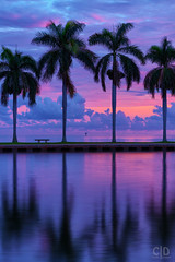 Purple Dusk (Fraggle Red) Tags: florida miamidadeco palmettobay miami deeringestateatcutler deeringestate keyhole reflections royalpalms palmtrees clouds evening sunset dusk hdr 7exp dphdr adobelightroomcc adobephotoshopcc20155 canonef24105mmf4lisusm