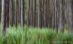 Enchanted Forest (Kiwi_Craig) Tags: slowshutterspeed trees abstract woodhillforest