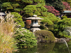 Gyoen-Garden-4 (Pixeleater) Tags: 2016 gyoennationalgarden november tokyo natur marple red herbst japan autumn rot ahorn