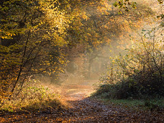 Into the Light (Damian_Ward) Tags: damianward photography damianward essex eppingforest light autumn