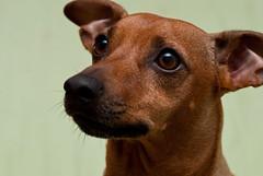 What? (RiccardoRas97) Tags: mordicchio dog mydog