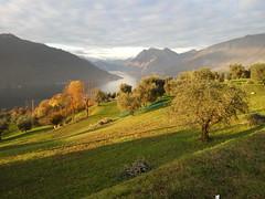 2016-11-26 15.51.42 (albyantoniazzi) Tags: italy lagoiseo bs sulzano monteisola