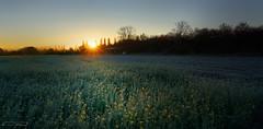 Frosty sunrise (clé manuel) Tags: sunrise morning frost cold sonnenaufgang winter november sun rays sonnenstrahlen