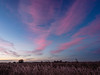 oxford-1-051216 (Snowpetrel Photography) Tags: olympusem5markii olympusm1240mmf28 otmoor oxfordshire dusk naturereserves reeds reserves sky starlings sunset winter oddington england unitedkingdom