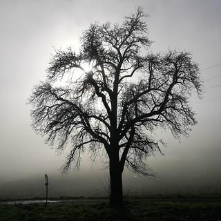 The fog is vanishing