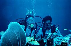 Mirar a cmara - Lookin at camara (Madrid   Spain) Tags: fish lookinatcamara underwater scuba santodomingo 1991 caribe portarit acuc diving