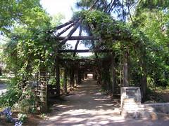 Wisteria Arbor, April. (Melinda Stuart) Tags: arbor wisteria spring nc chapelhill uncch unc walk path public arboretum garden coker