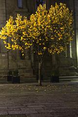 Alive (ferreira.ajbf) Tags: tree color yellow stone alone night nature leaf leaves orange autumn grey rock bright december
