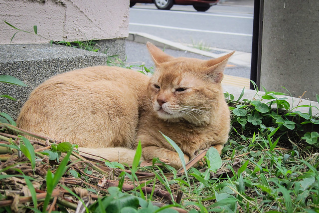 Today's Cat@2013-06-23
