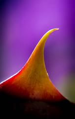 Red Orca (Raggedjack1) Tags: thorns dogrose nativespecies rosacanina