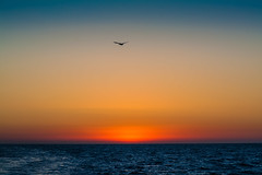Sunset over the Pacific (Felix's Endless Journey) Tags: sunset pelican pacificocean ventura